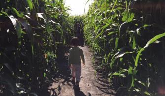 加拿大旅記。玉米田迷宮Corn Maze in Canada