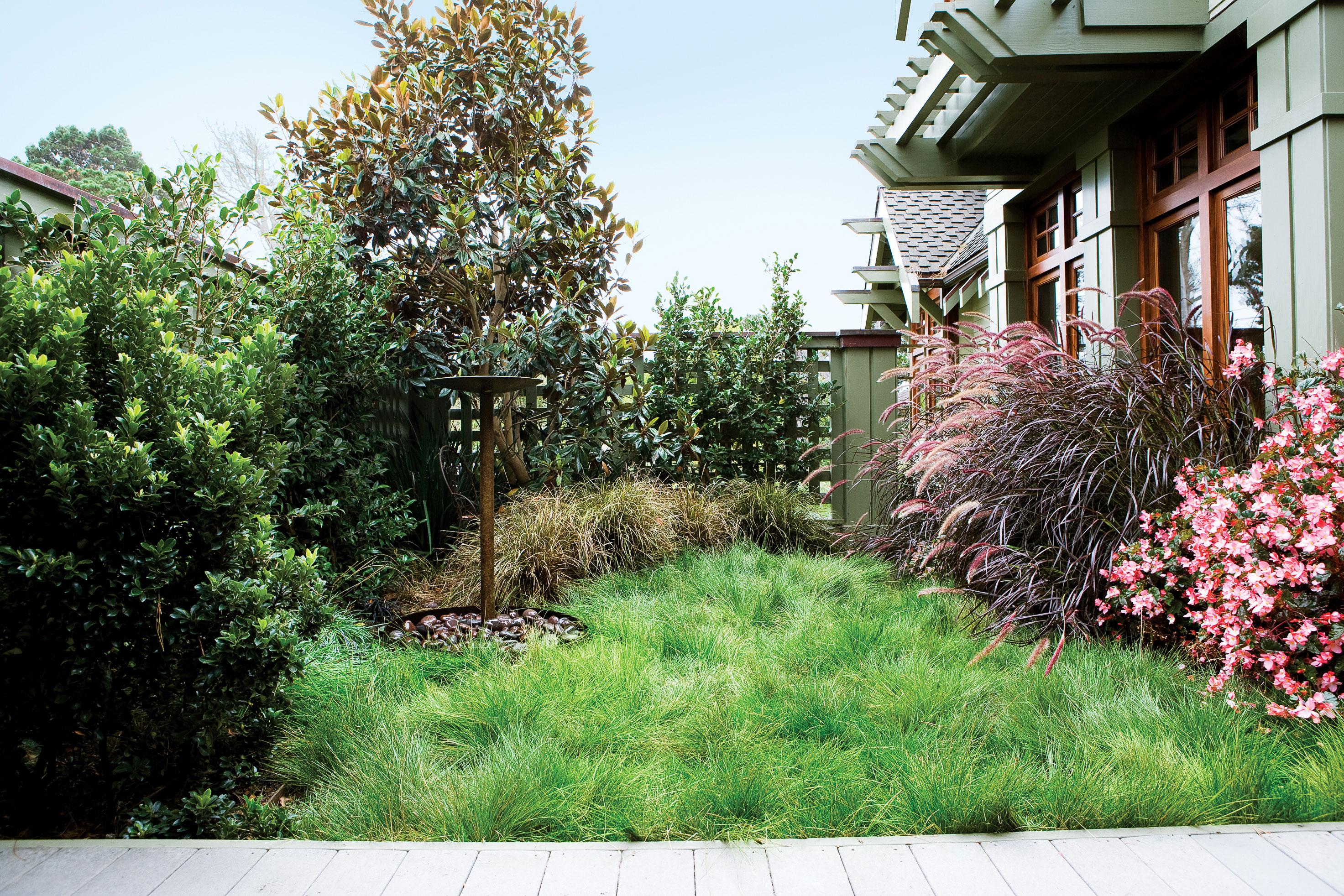 Fullsize Of Uc Verde Buffalo Grass