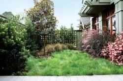 Small Of Uc Verde Buffalo Grass