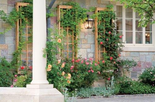 Medium Of Lattice Garden Wall