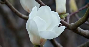 花不在觀光勝地,在心裡———豐原碧雲宮