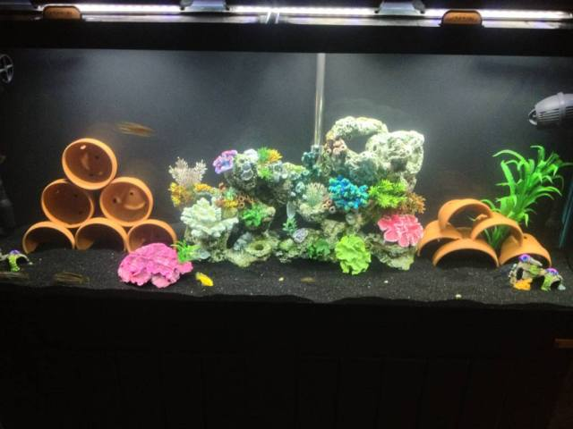 My New 55 Gallon   142315
