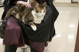 [染髮] 貓咪坐檯的東區髮廊Deluxe (染黑髮)