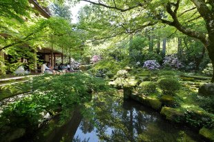 [自助旅行] 京都新綠,大原三千院新綠