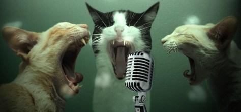 karaoke cats