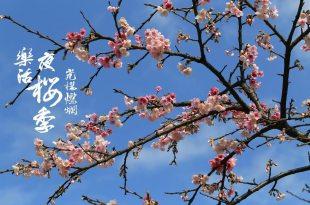 台北賞櫻|2018夜櫻季,東湖/內湖樂活公園有最浪漫的櫻花步道,新春過年賞櫻去!