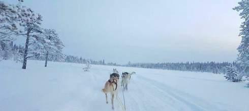 瑞典極光|自駕狗拉雪橇大冒險!那夜我來到北歐童話中,在極光湖畔飛奔,在小木屋爐旁含淚看極光!
