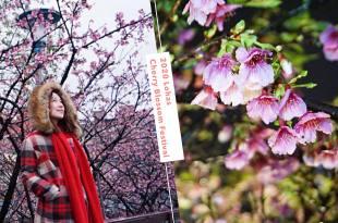 台北賞櫻|2020樂活夜櫻季,東湖/內湖樂活公園有最浪漫的櫻花步道,新春情人節賞櫻去!