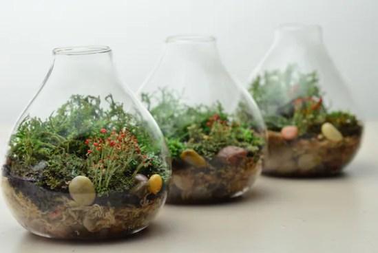 Lichen Terrarium // Forest // Teardrop Vase // Home and Living // Green Gift Ideas // Home Decor// Indoor Garden