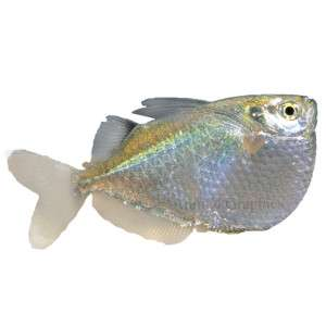 Tropical fish petsmart from petsmart com glofish for Petsmart com fish