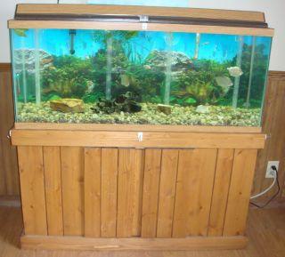 55 gallon fish tank necessities 55 gallon fish aquarium for 55 gallon fish tank kit
