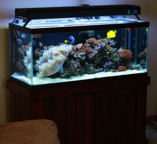 150 Gallon Saltwater Drilled Aquarium (Fish Tank) with Wet/Dry Filter