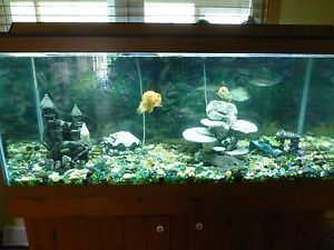Complete 55 Gallon Aquarium Fish Tank with Fish and Stand
