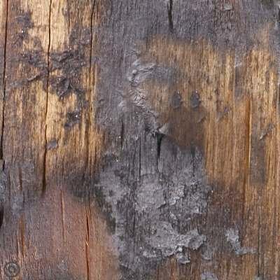 Removable Wallpaper Singed Wood Peel & Stick Self Adhesive