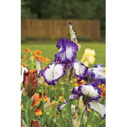 Small Crop Of Landscaping With Flowers Ideas