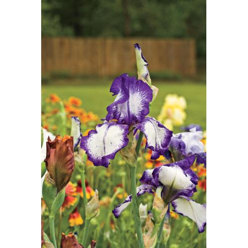 Medium Crop Of Landscaping With Flowers Ideas