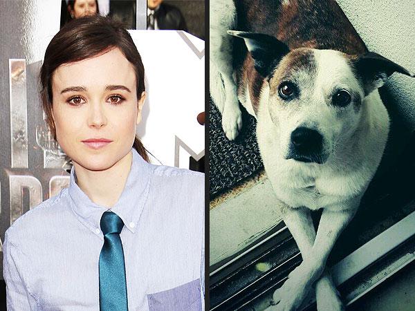 Ellen Page Renames Fans Pets: Twitter
