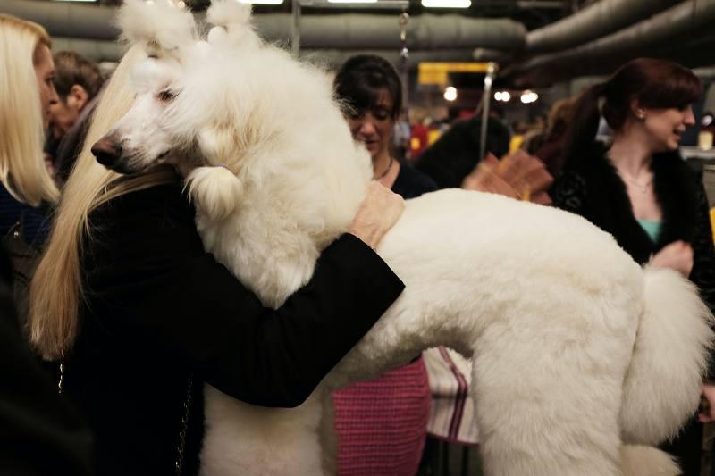 Large Of Most Loyal Dog Breeds