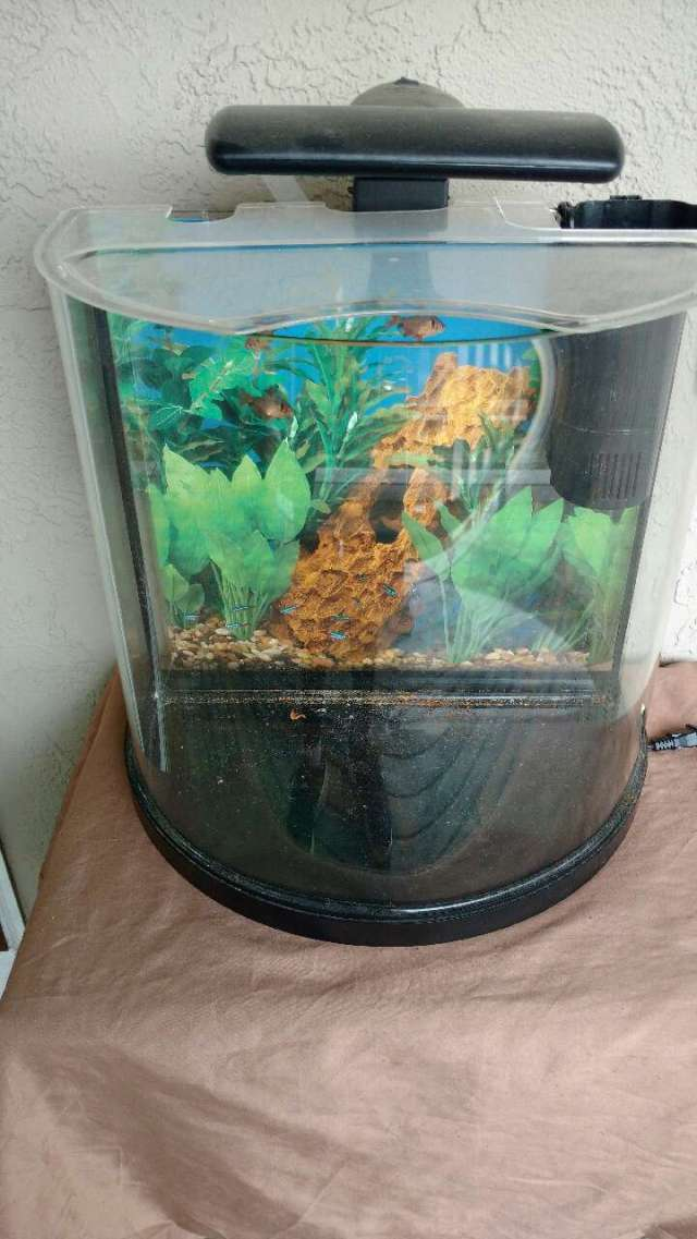 letgo   15 gallon fish tank bow shape and  in Riverlea, OH