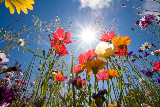 fiori-dal-basso-corbis-42-27041373-jpg