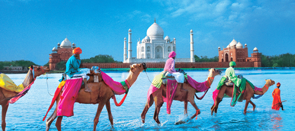 Travel_India_Tourism_Tahj_Camels
