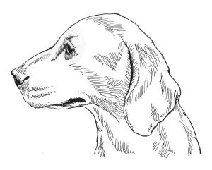 Illustration of a dog, representing the Malodorous Mutt Settlement Event for Warhammer Quest