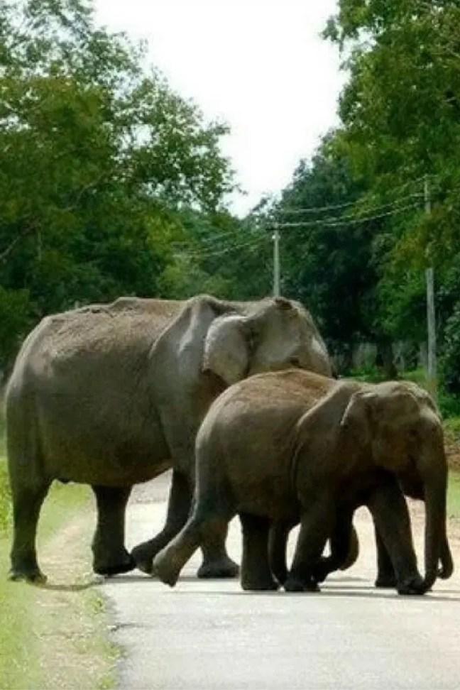 Elephant – The gentle giant