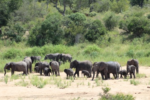 Viewed from our Camp - KNP