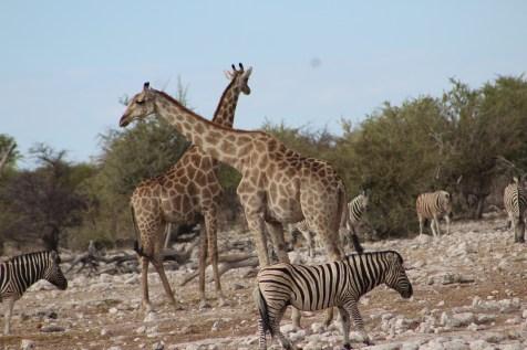Namibia Tour 2015-16 653