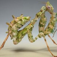 Michigan State Üniversitesi, resmini çekip pestid@msu.edu adresine gönderdiğiniz böcek, artropod, bitki ya da otu bedava olarak sınıflandırıp tanımlayarak size bildiriyor.