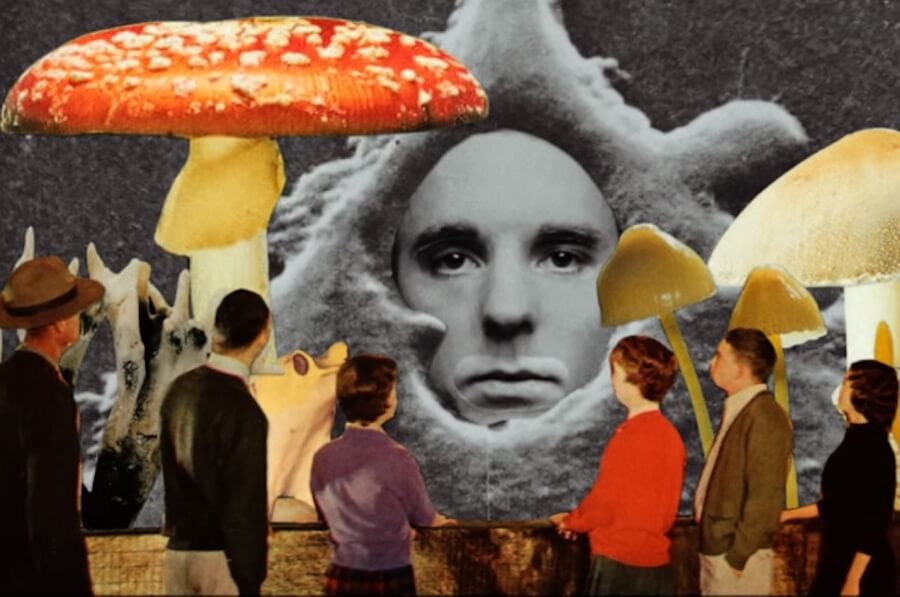 andy-shauf-the-party-mushroom