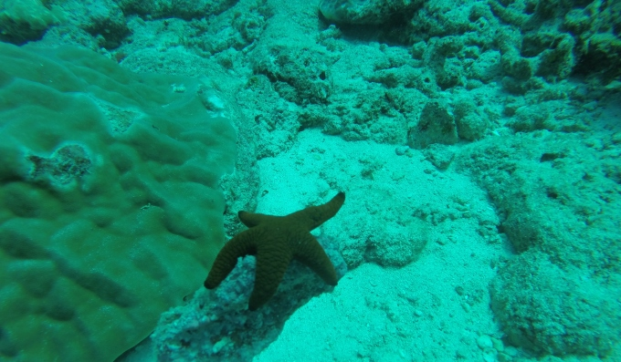During April-May 2010, between 65% and 81% of live coral cover was bleached off the Andaman and Nicobar (A&N) islands.