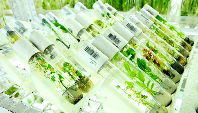 Genetic resources stored in gene banks will provide the plants  the capacity to cope with a variety of environmental conditions in a warming world. (Image by CIAT)