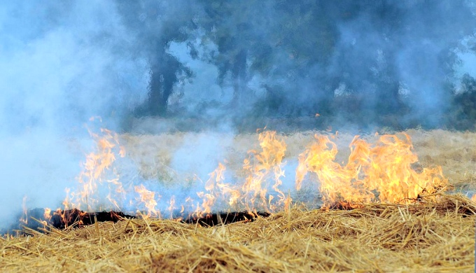 Field-burning of agricultural residues is among the largest emitters of short-lived climate pollutants like black carbon (Image by CIAT)