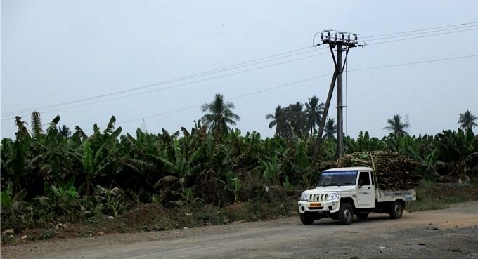 A banana grove near the foundation stone (Image by S. Gopikrishna Warrier)
