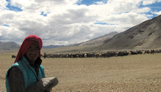 A nomad with his herd in the Kharnakh-Ladakh region of Jammu & Kahmir. (Photo by Athar Parvaiz)