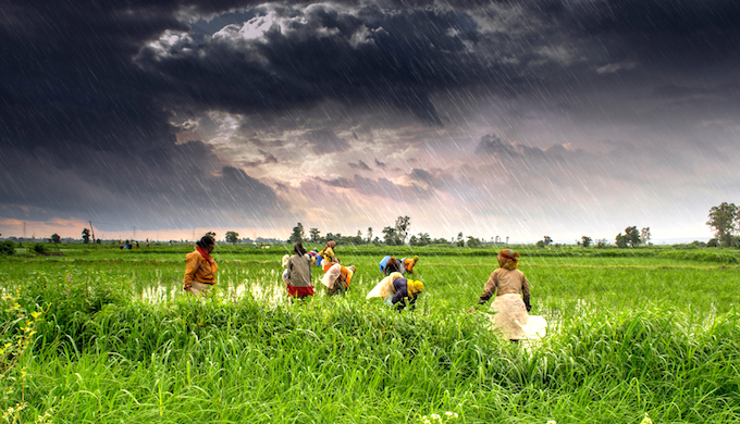 Climate change will lead to yield shocks. (Photo by Rajarshi Mitra)