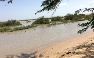 Replanting mangroves in Kachchh saves coast, people, world