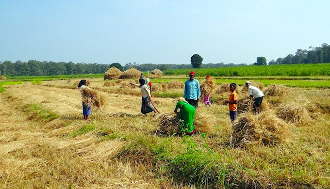 Food harvests across South Asia may shrink due to global warming even as demand increases (Photo by Bishnu Sarangi)