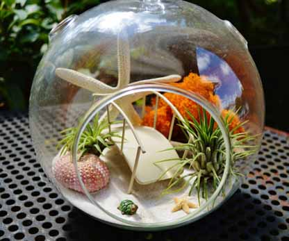 Beach Bridge Terrarium