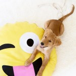 DIY No Sew Emoji Dog Bed