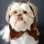 DIY Easy Ewok No Sew Dog Costume