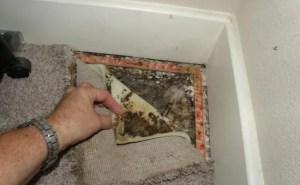mold-detection-carpet