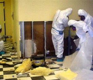 mold removal of contaminated materials
