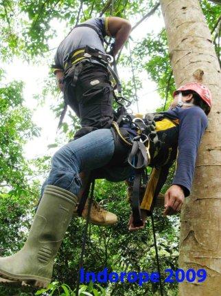 Advanced Safety Tree Climbing Training 8
