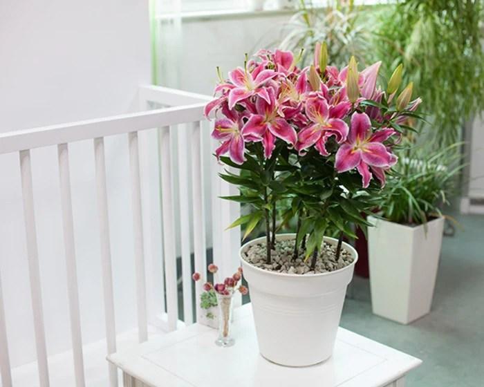 家居養花:花卉冬季該如何養護,給花卉採取保暖的方法!