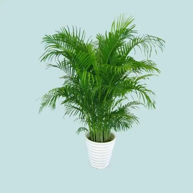 常見的吸毒植物,都是室內耐養的品種
