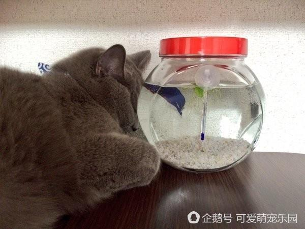 以為貓咪靠著水缸睡著了,換個角度才發現是這樣的眼神!