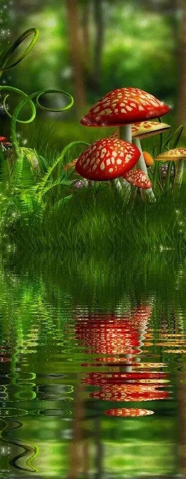 漂亮的蘑菇可遠觀而不可褻玩,只能看不能吃