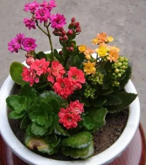 家居養花:充分利用生活中的肥料製作花肥,綠色肥效好!